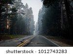 smoke in the woods    Shutterstock . vector #1012743283