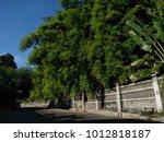 strong beautyful bamboo fence | Shutterstock . vector #1012818187