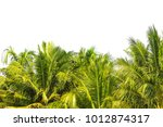 on top of tropical coconut palm ... | Shutterstock . vector #1012874317