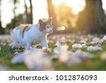 Portrait Of 3 Color Cats...