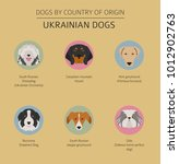 dogs by country of origin.... | Shutterstock .eps vector #1012902763