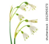 snowdrop flowers on the white | Shutterstock . vector #1012905373