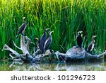 cormorants in the danube delta | Shutterstock . vector #101296723