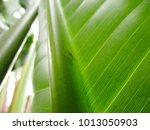 metallic bug on a green leaf  ... | Shutterstock . vector #1013050903