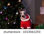 cute american hairless terrier... | Shutterstock . vector #1013061253