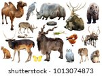 assortment of many kind of... | Shutterstock . vector #1013074873