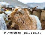 Wildlife In Ladakh  India