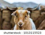 Wildlife  Ladakh  India