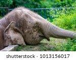 male friendly endangered borneo ... | Shutterstock . vector #1013156017