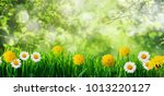 spring grass background with... | Shutterstock . vector #1013220127