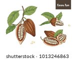 set of detailed drawings of... | Shutterstock .eps vector #1013246863