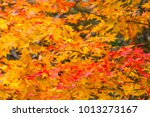 maple color change in winter in ... | Shutterstock . vector #1013273167