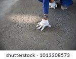 a construction worker check... | Shutterstock . vector #1013308573