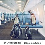 penguins   fly in the airplane...   Shutterstock . vector #1013322313