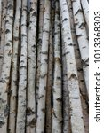 Small photo of Birch trunks for firewood, building timber or decoration. Betula Papyrifera. Natural wood background