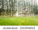 scenery green golf and meadow... | Shutterstock . vector #1013396023