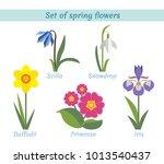 spring flowers set. scilla....