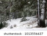 photo of a beautiful coniferous ... | Shutterstock . vector #1013556637