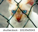 Stray Cat Behind Fence Showing...