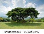 Old Big Tree Under Blue Sky At...