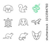 pets linear icons set. maltese... | Shutterstock .eps vector #1013584783