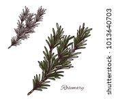 rosemary seasoning spice herb... | Shutterstock .eps vector #1013640703