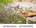 beautiful close up view of a...   Shutterstock . vector #1013663083