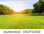green tree and green grass in... | Shutterstock . vector #1013711563
