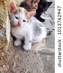 Stock photo white three colored homeless kitten on street little spotted stray kitten lying outdoor white 1013762947