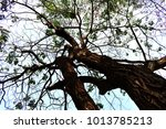 view from under to top of... | Shutterstock . vector #1013785213