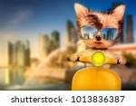 funny adorable dog sitting on a ...   Shutterstock . vector #1013836387