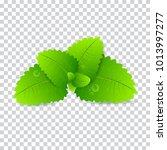 fresh mint leaf. vector menthol ... | Shutterstock .eps vector #1013997277