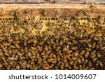 close up view of the working... | Shutterstock . vector #1014009607