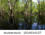flooded forest with water... | Shutterstock . vector #1014014137