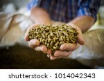 Small photo of Close up image of hands holding animal feed at a stock yard