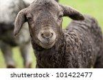 cute lamb | Shutterstock . vector #101422477