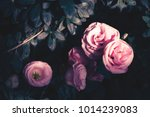 pink rose and leaf on vintage... | Shutterstock . vector #1014239083