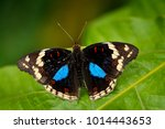 black and blue butterfly... | Shutterstock . vector #1014443653