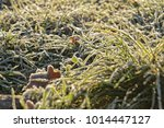 green grass covered with frost... | Shutterstock . vector #1014447127