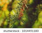 beautiful greenery as a... | Shutterstock . vector #1014451183
