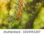 beautiful greenery as a... | Shutterstock . vector #1014451207