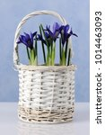 basket with spring blue irises | Shutterstock . vector #1014463093
