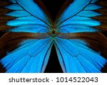 Stock photo blue abstract pattern wings of the butterfly ulysses closeup wings of a butterfly texture 1014522043