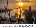 cat on the side of the beach | Shutterstock . vector #1014616837