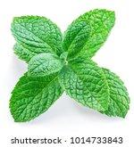 fresh apple mint. close up.... | Shutterstock . vector #1014733843