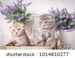 purebred cats. pets. a couple... | Shutterstock . vector #1014810277