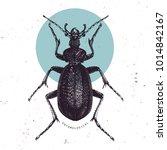 huge violet ground beetle hand... | Shutterstock .eps vector #1014842167