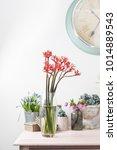 jatropha podagrica is a species ... | Shutterstock . vector #1014889543