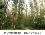 Tall Green Trees In A Forest I...