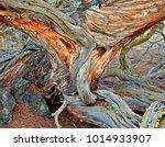 Desert Design   Juniper Tree I...